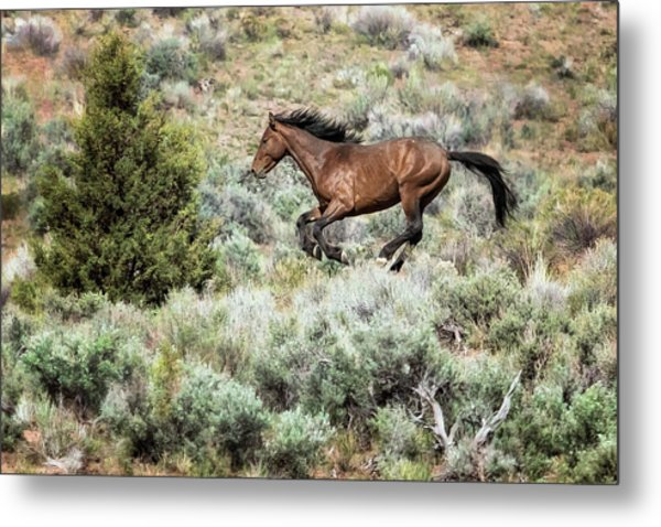 Running Through Sage Metal Print