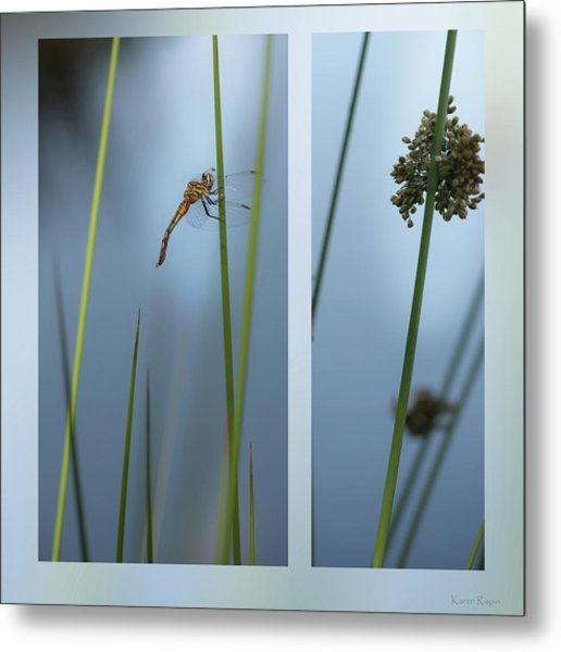Rushes And Dragonfly Metal Print