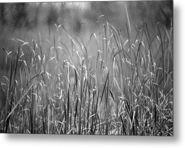 Rushes Metal Print