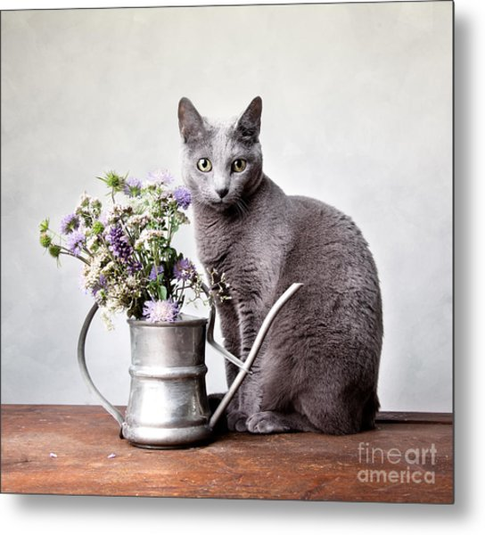 Russian Blue 02 Metal Print