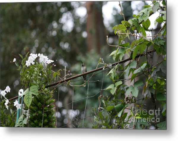 Metal Print featuring the photograph Rustic Serenity by Cynthia Marcopulos