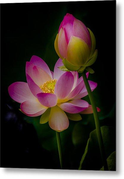 Sacred Water Lily 4 Metal Print
