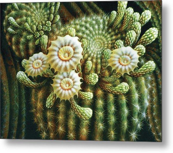 Saguaro Cactus Blossoms Metal Print