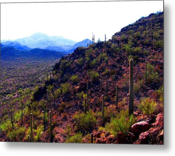 Saguaro National Park Winter 2010 Metal Print
