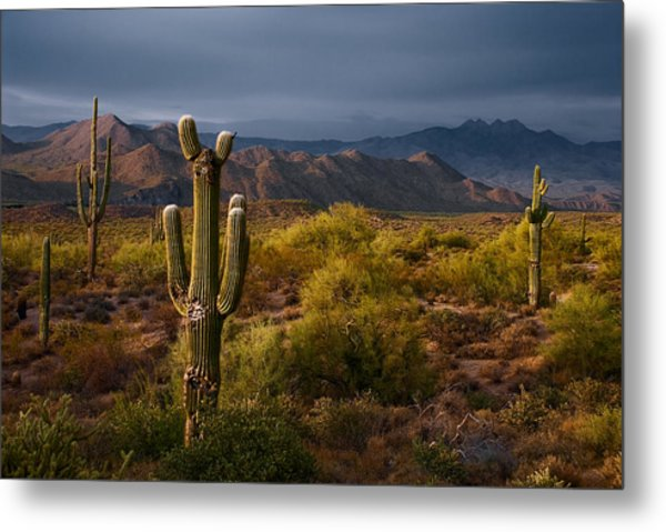Saguaro Sunset At Four Peaks Arizona Metal Print