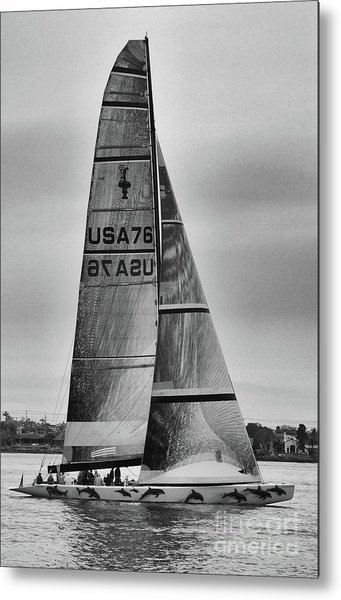 Sailing With Dolphins Metal Print