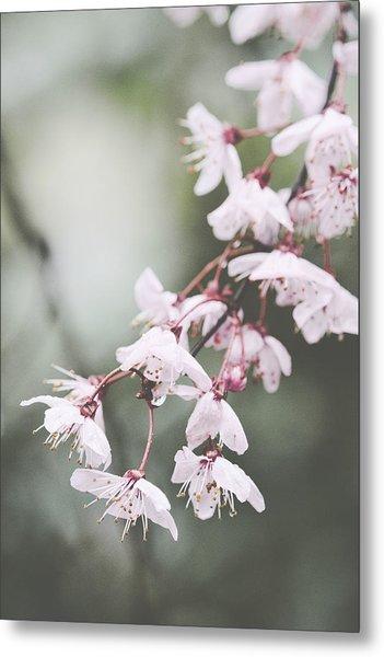 Sakura #278 Metal Print