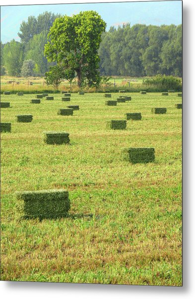 Salem Hay Field Metal Print