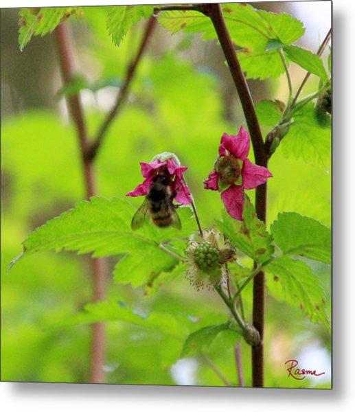 Salmonberry Honey Metal Print