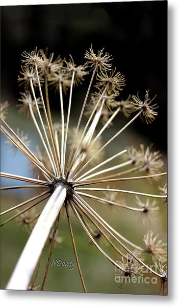 Salsify Stems Metal Print