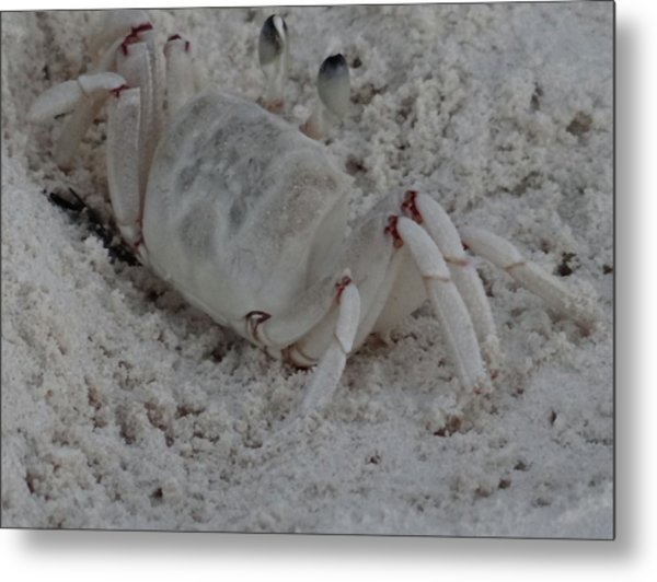 Sand Crab Metal Print