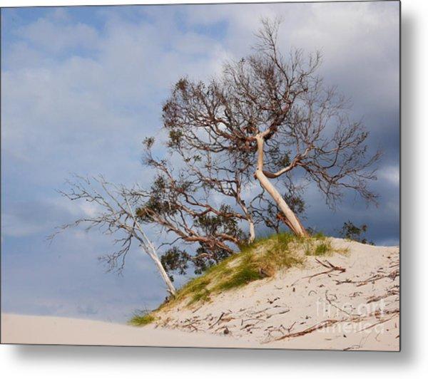 Sand Dune With Bent Trees Metal Print