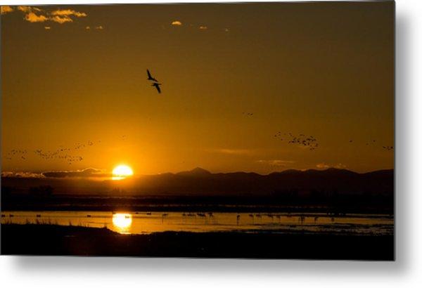 Sandhill Crane Sunrise Metal Print