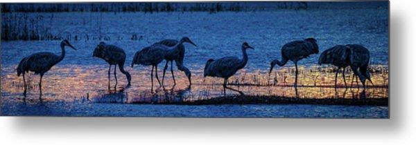 Sandhill Cranes At Twilight Metal Print
