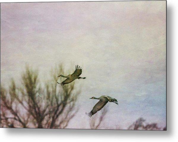 Sandhill Cranes Flying - Texture Metal Print