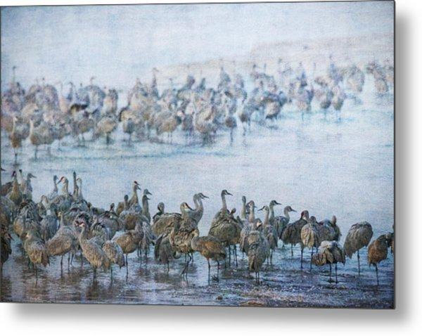 Sandhill Cranes Texture Metal Print