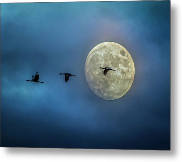 Sandhill Cranes With Full Moon Metal Print