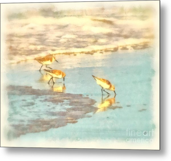 Sandpipers Along The Shoreline Metal Print