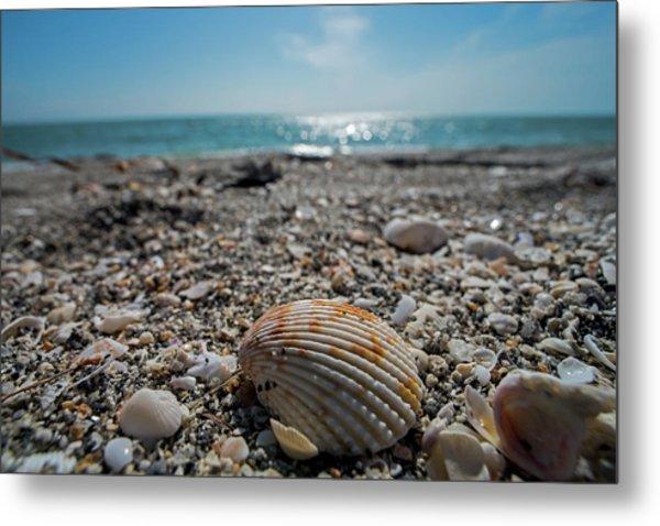 Sanibel Island Sea Shell Fort Myers Florida Metal Print
