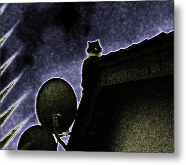 Satellite Dish And Cat Metal Print by Eric Forster