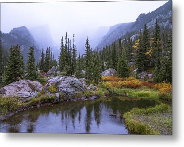 Saturated Forest Metal Print