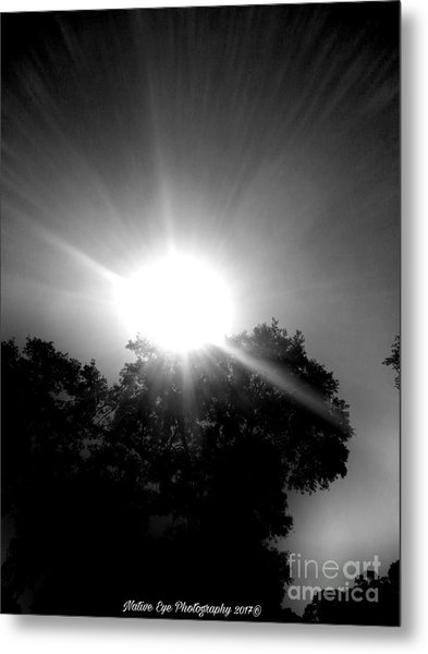 Saturday Sunshine On A Charleston Morning Metal Print