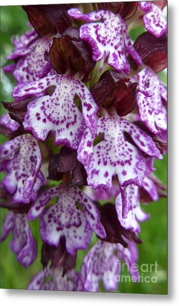Savage Orchid 2 Metal Print