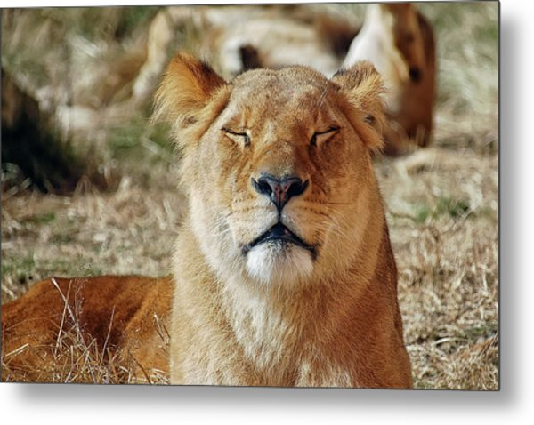 Savoring The Sun Metal Print