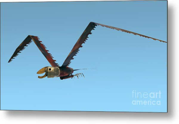 Saw Bird -raptor Metal Print