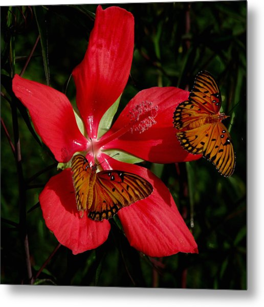Scarlet Beauty Metal Print