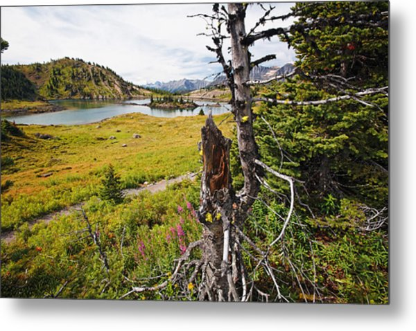 Scenic Alpine Lake And Meadow Metal Print by George Oze