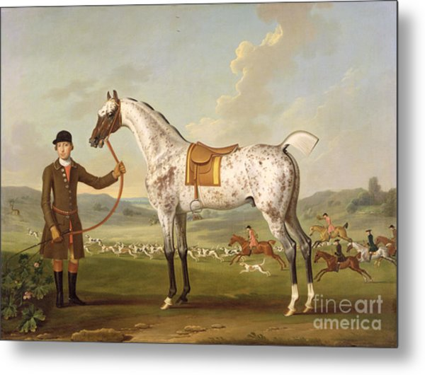 Scipio - Colonel Roche's Spotted Hunter Metal Print