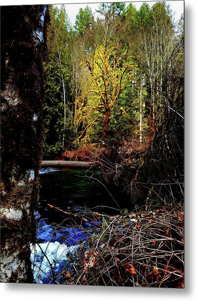 Scoggins Creek 3 Metal Print