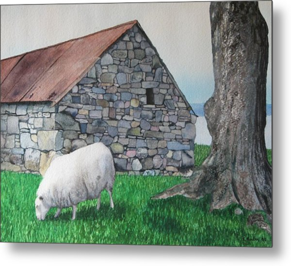 Scottish Sheep Metal Print by Sharon Farber