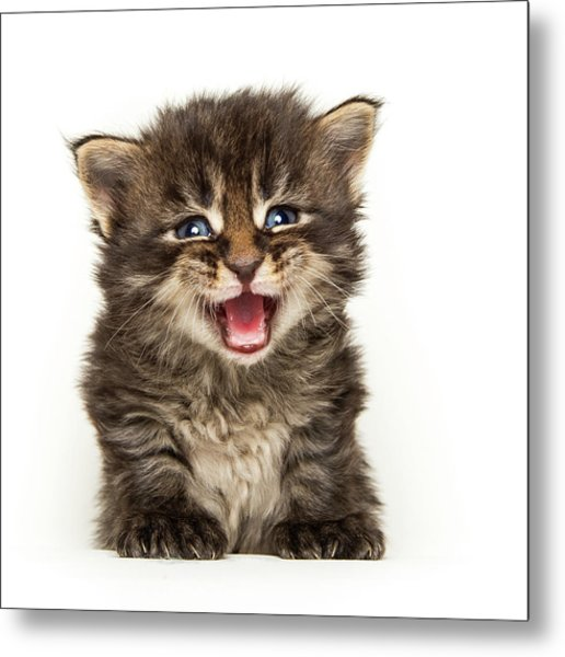 Screamer Metal Print