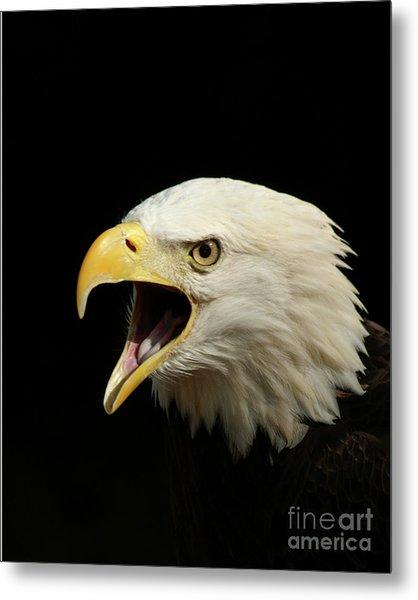 Screaming Eagle Metal Print