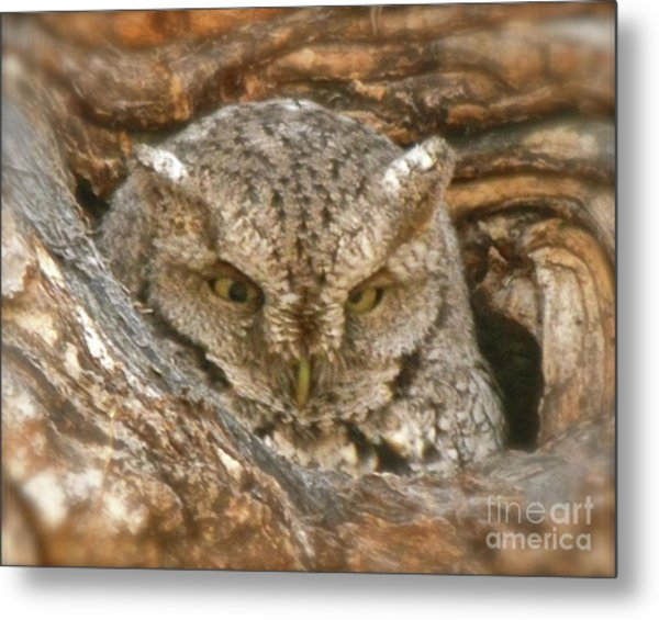 Screech Owl On Spring Creek Metal Print