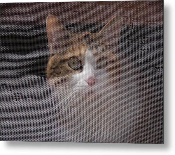 Metal Print featuring the photograph Screened Cat by Dutch Bieber
