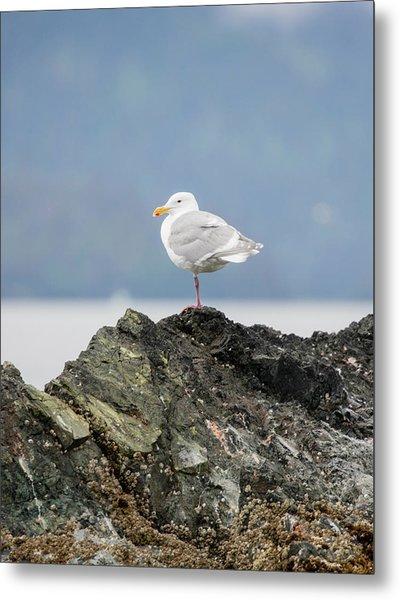 Sea Bird Perched On A Rock Metal Print