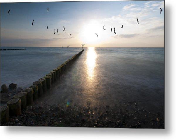 Sea Birds Sunset. Metal Print