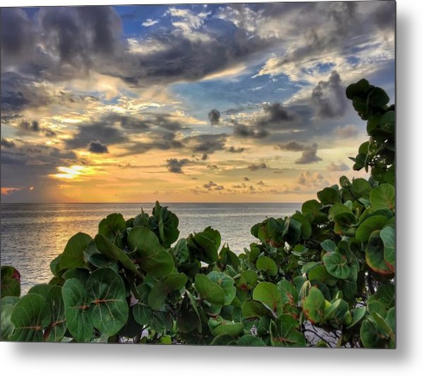 Sea Grape Sunrise Metal Print