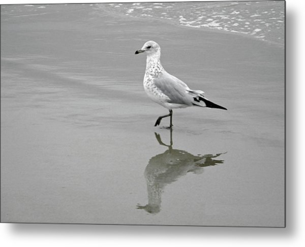 Sea Gull Walking In Surf Metal Print