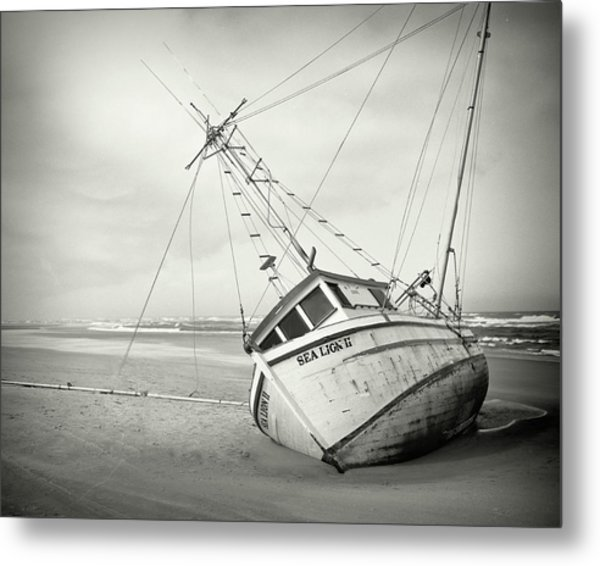 Sea Lion II - On The Beach Metal Print by HW Kateley