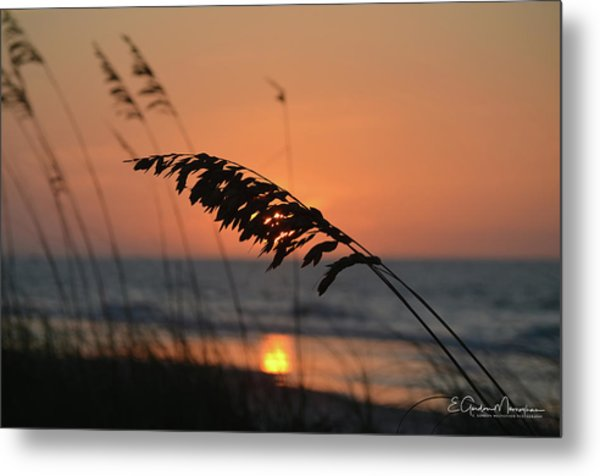 Sea Oats At Sunrise Metal Print