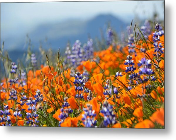 Sea Of California Wildflowers Metal Print