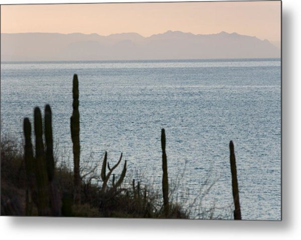 Sea Of Cortez Metal Print by Richard Steinberger