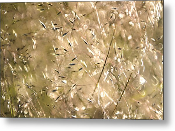 Sea Of Grass Metal Print