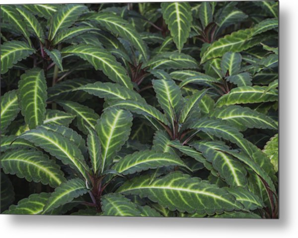 Sea Of Leaves Metal Print