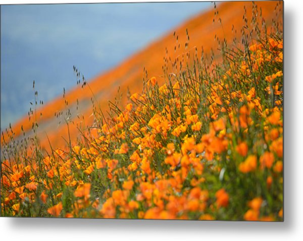 Sea Of Poppies Metal Print