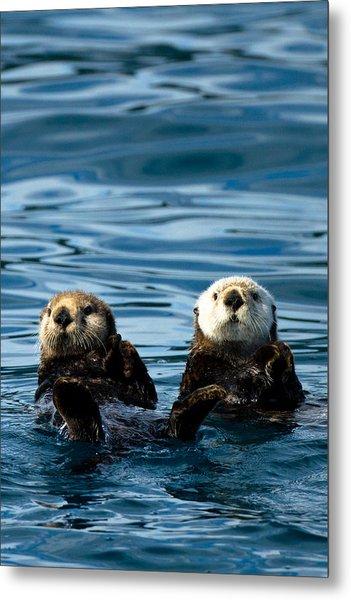 Sea Otter Pair Metal Print